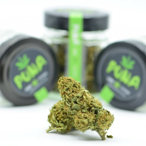 CBD Bestellen billig Orange Bud