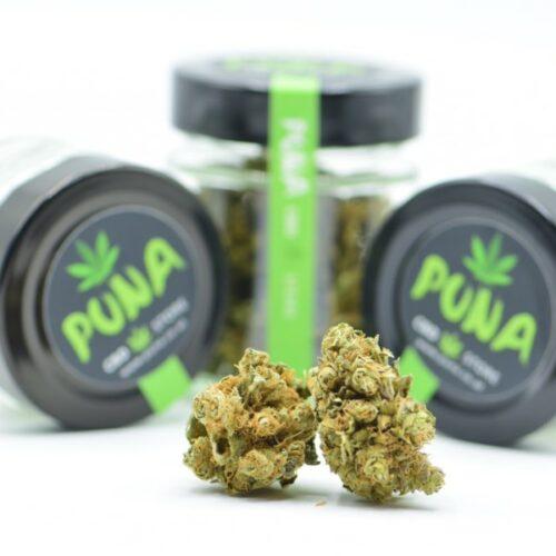 CBD Weed günstig kaufen Amnesia Haze